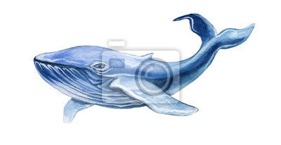 Blue Whale watercolor illustration hand drawn isolated on white.