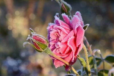 Sticker Blumen 529