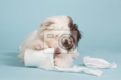 Boomer Welpen mit WC-Papier