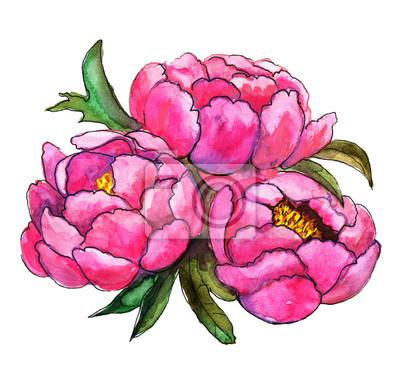 Bouquet von Pfingstrosen Aquarell