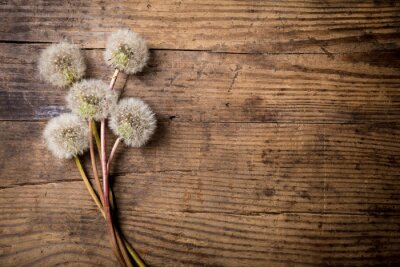 Sticker Bouquet von weißen Löwenzahn auf Holztisch