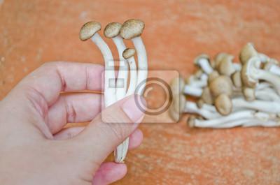 Braun Buche Pilz auf der Hand