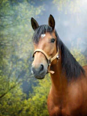 Sticker Brown Pferd im Frühjahr Landschaft