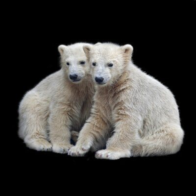 Sticker Bruderschaft der Eisbärenjungen