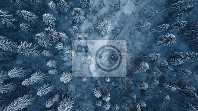 Sticker Brummenfoto des Schnees bedeckte immergrüne Bäume nach einem Winterblizzard in Litauen.