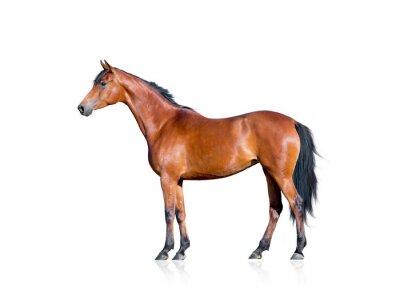 Sticker Bucht Pferd isoliert auf weißem Hintergrund