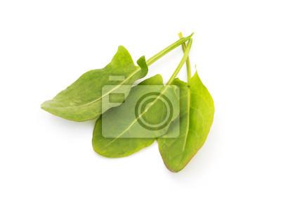 Bunch of Spinat Blätter auf weißem Hintergrund isoliert