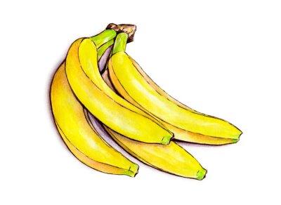 Sticker Bündel Bananen isoliert auf weißem Hintergrund. Aquarell-Illustration. Tropische Früchte