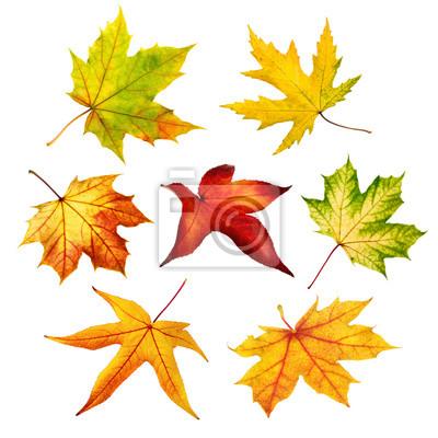 Sticker Bunte freigestellte Herbstblätter im Set