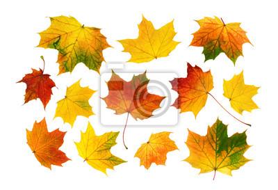 Sticker Bunte Herbstblätter im Set