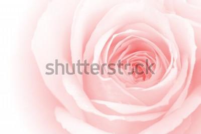 Sticker bunte rosafarbene Blumenblätter der Nahaufnahme für Hintergrund