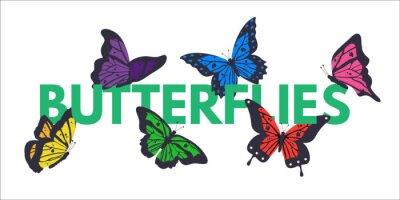 Butterflies color vector banner with copyspace