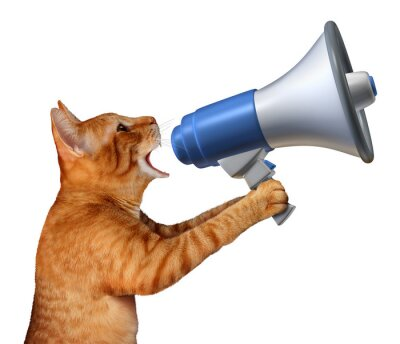Sticker Cat Announcement
