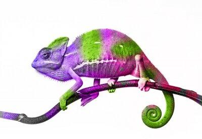 Sticker Chamäleonfarben