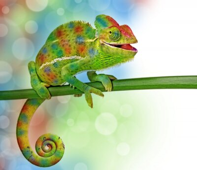 Sticker chameleon and colors