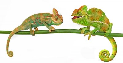 Sticker Chameleons