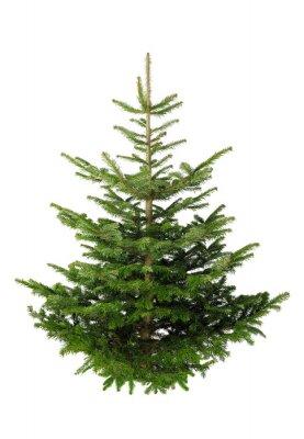 Sticker Christbaum ohne Schmuck auf weiß
