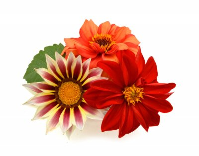 Close-up colorful daisy flowers in vase isolated on white background