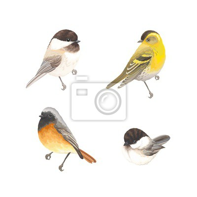 Collection of beautiful birds Chickadee, Redstart and Siskin. Vector illustration birds for your design.