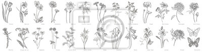 Sticker Collection of hand drawn flowers and herbs. Botanical plant illustration. Vintage medicinal herbs sketch set of ink hand drawn medical herbs and plants sketch