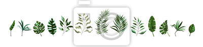 Sticker Collection of tropical greenery leaf plant herbs leaves monstera palm