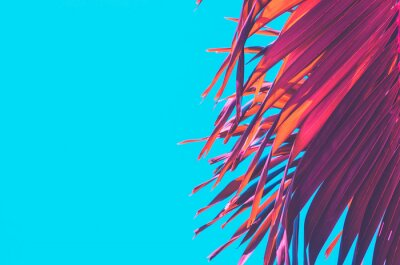 Sticker Copy space pink tropical palm tree on sky abstract background. Summer vacation and nature travel adventure concept.