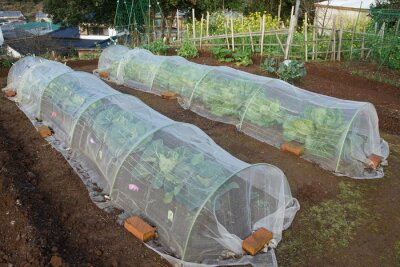 Sticker Cover for the vegetables cultivation of the field of the frost prevention