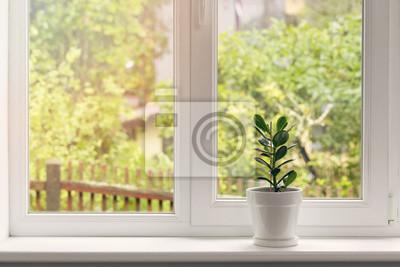 Sticker Crassula Blume im Topf auf Fensterbank