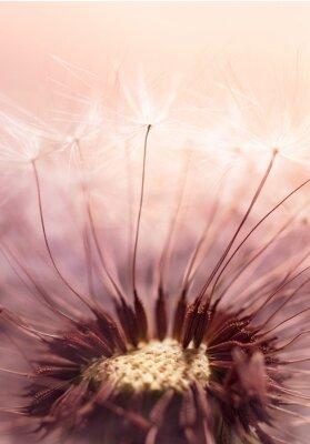 Sticker Dandelion Samen auf Sonnenlicht - Abstract