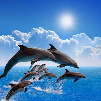 Sticker Das Springen von Delfinen