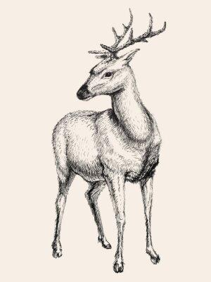 Sticker Deer Vektor-Illustration, von Hand gezeichnet, Skizze
