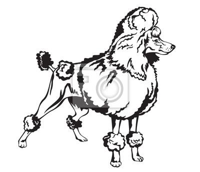 Dekorative Pudel-Vektor-Illustration
