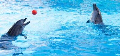 Sticker Delphine spielen Kugeln