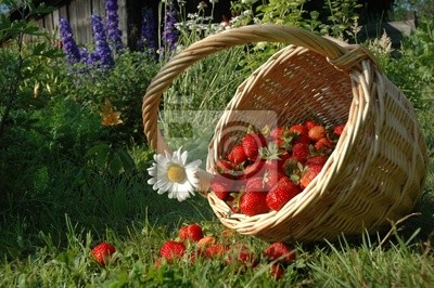 der Korb mit Erdbeeren.