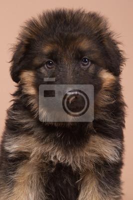 Deutsch Schäferhund Porträt auf Beige