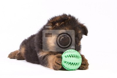 Deutsch Schäferhund Welpen isoliert auf weiß mit Ball