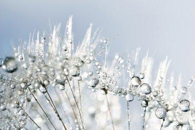 Sticker Dewy dandelion