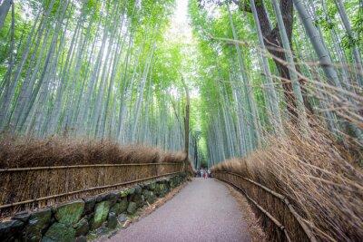 Sticker Die Arashiyama Bamboo Grove von Kyoto, Japan.