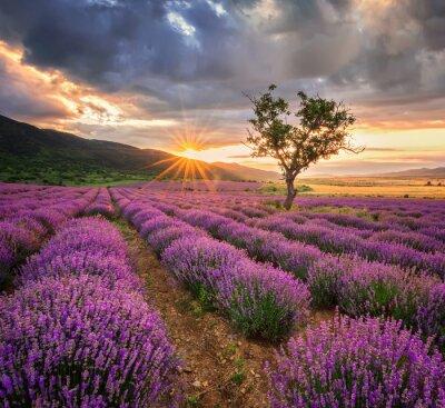 Sticker Die atemberaubende Landschaft mit Lavendelfeld bei Sonnenaufgang