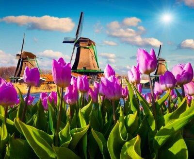 Sticker Die berühmten holländischen Windmühlen