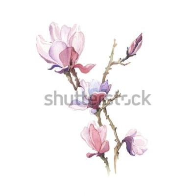 Sticker Die Frühlingsmagnolien-Aquarellblume lokalisiert auf dem weißen Hintergrund
