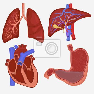 Die inneren organe des menschen notebook-sticker • wandsticker auch ...