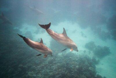 Sticker Dolphin unter Wasser