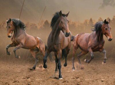 Sticker drei Pferde
