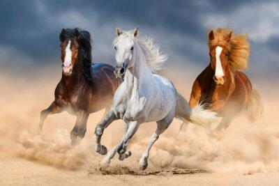 Drei Pferde mit langen Mähne laufen Galopp in der Wüste