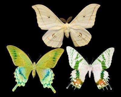 Sticker Drei Schmetterlinge isoliert auf schwarz