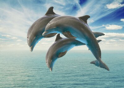 Sticker drei springenden Delphinen