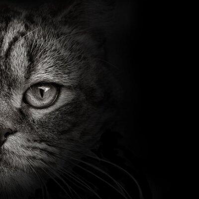 Sticker Dunkle Mündung Katze close-up. Vorderansicht