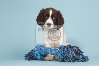 Dutch partidge dog puppy with a blue toy
