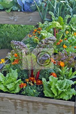 Ein Hochbeet Opf Gemuse Und Blumen In Einem Stadtischen Garten